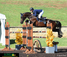 Looking focussed and determined, James Arkins and Eurostar enter the arena to compete in the second qualifier of the Mini Prix at the Sydney Summer Show Jumping Classic.