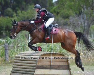 "Sarah Boatwood in the Open Grade 1 riding ""Edenvale Joshua, placing 5th with a final score of 115"