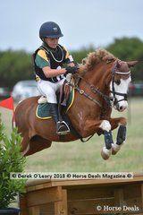 """Tayla Anderson in the Pony Club Grade 4 riding """"Creswell Montana"""""""