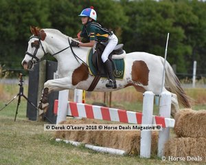 """Hannah Bonella placed 2nd in the Pony Club Grade 4 riding """"Mickey"""" with a final score of 29"""