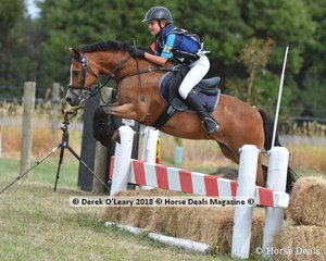"""Anna Michalczyk rode """"Little Dude"""" in the Pony Club Grade 4"""