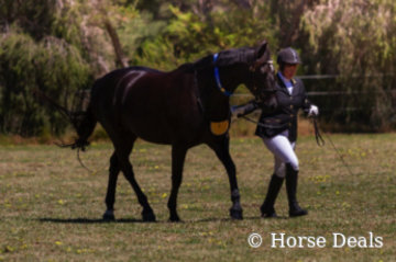 Brin Corina- Lou & Judith Pryse- State Champion Led Partbred Andalusian