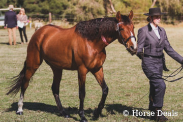 Yalkin Melosa & Ashleigh Moloney- Supreme Ridden Partbred Andalusian