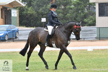 Well known and successful showing exhibitor, Rebecca Groen rode her, 'Consul Reef' to claim the 2019 VAS First Season Hack Reserve Championship.