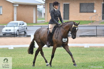 Experiened and successful showing exhibitor, Rebecca Gerber made the First Season Hack Final with her, 'Elmdale Park  Hightime' (15-15.2hh).