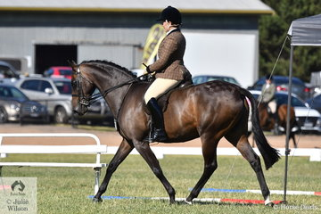 Well known and successful showing exhibitor, Michelle Bryant made Show Hunter Galloway Top Five with her, 'Karlana You'r Welcome'.