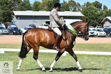 Popular and successful showing identity, Brian Scholes rode his charming, 'A Welcome Stranger' (15.2-16hh) to make Top Five in the Small Show Hunter Hack Championship.