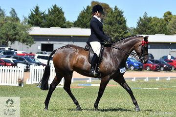 Kathleen Mullan had a super 2019 VAS Saddle Horse Championships and is pictured aboard her, 'Divinity' that was declared 2019  Small Hack Reserve Champion.