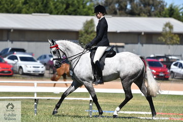 Ava Halloran had a successful show with 'Just An Enigma' formerly exhibited by the late  Sarah Beltz. Ava took out the Child's Hack Championship yesterday and today rode the lovely grey to claim the 2019 VAS Small Hack Championship.