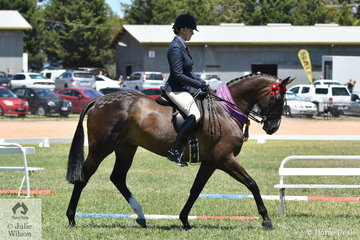 Eliza Green has had a super 2019 VAS Saddle Horse Championships with her, 'Like A Boss' that today claimed the Large Hack Reserve Championship.