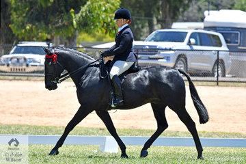 What a marvellous end to this chapter in the life of, 'Savesomtimetodream'. Horse Deals has followed the progress of Kathleen Mullan's retraining of the successful racing Standardbred. Today they took out the Hero Series Final for qualified Standardbreds, the biggest class (20) at the 2019 VAS Saddle Horse Championships. They also claimed the Newcomer award for horses That Had Raced Within Two Years.