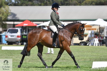 Briony Randle rode Sandra Donovan's, 'Astral High Society' to claim the EA Newcomer Show Hunter Galloway reserve Championship. They went on to claim the same award in the Riding Pony Stud book Society ring.