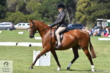 Indi Shepherd rode Danielle Ford's, 'Davron Park Armani Code' to win the EA class for Newcomer Large Show Hunter Galloway.
