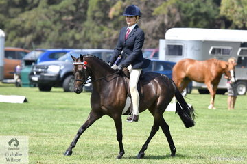 Kerry Dunstan is back in the competition arena and again enjoying the success of her home bred ponies. Kerry is pictured aboard , 'Malibu Park Tip Top' (Llanarth Top Cat imp/Malibu Park Sorrento) that won the 2018 Final of the Riding Pony Society Newcomer competition.