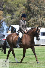Kristy Thompson rode her typey, 'Fable Park Copyright' to take third place in the class for Riding Pony Show Hunter 13.2-14.2hh.