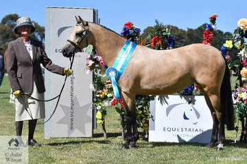 Very successful pony exhibitor, June Bode claimed the Supreme Junior (Diva) Dilute award with her, 'Custard Tart of Sefton'.