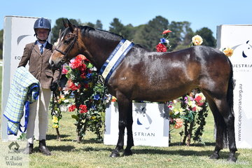 Libby Feltoe is pictured with her APSB Champion Mountain and Moorland Pony, the New Forest, 'Haberfield Fiancee'.