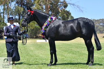 Kathleen Mullan had another great day with the Harness Racing Victoria nomination, 'Savesomtimetodream' that was declared Best On Show, Supreme led Standardbred and Supreme Ridden and Kathleen took out the Champion Rider award at the 25th Victorian State Standardbred Championships.