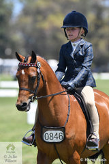 Sandra Olney's, 'Taradale Splinter' ridden by Grace Baines is pictured during the class for Ridden APSB Riding Pony.