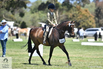 Amelia Baines is pictured aboard Sandra Olney's Ridden APSB Partbred Pony, 'Taradale Mysta'.