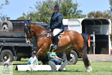 Rachel Ball rode her, 'Diablo' to win the class for Ridden Partbred Clydesdale Male.