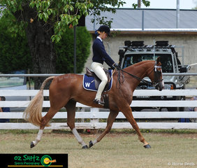 Competing at the 2019 Kingston Jamboree in the Hack over 15.2h was Jorja Power from Walcha and her horse Comet..