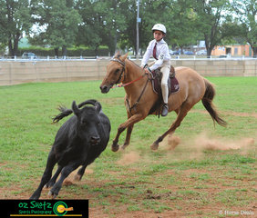 Last out to compete in the 9 years and Under 11 Campdraft on Friday was Jack Sinclair and Sisco from Inverell at the 2019 Kingstown Jamboree.