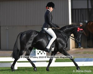 "Champion in the Child's Galloway Rider Under 17 yo, went to ""Classic Image Of Sefton"" ridden and exhibited by Shae Lattimer"