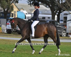 """""""KA Holly Supreme"""" was in the Top Ten in the Child's Galloway Rider under 17 yo, ridden and exhibited by Sarah Allsopp"""