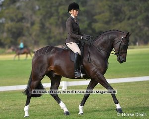 """""""Dreamtime Xcalibur"""" placed 2nd in the Graduate Saddle Show Hunter Hack, ridden by Ali Berwick, exhibited by Ali Berwick & Alexandra Mackey"""