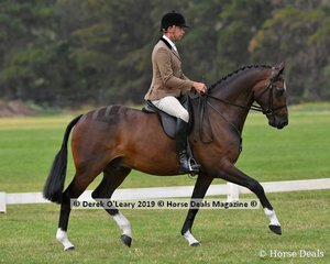 """Winner of the Graduate Show Hunter Hack, """"M. Amadeus"""" ridden by Greg Mickan, exhibited by Fiona Kittson-Welsh"""