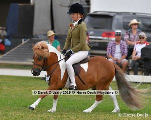 """""""Kilpara Park Jumbuck"""" was Top Ten in the APSB Child's Shetland Rider Under 14yo, ridden by Charlee Cartledge and exhibited by Lisa Virgona"""