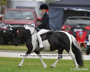 "Reserve Champion in the APSB Child's Shetland rider under 14yo, ""Kimba Karrue"" ridden by Jessica Sharp exhibited by Kellie Webster"