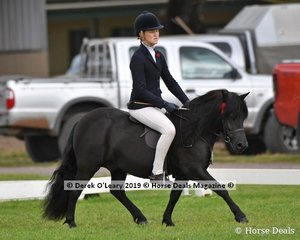 """""""Colvadale Odin"""" in the APSB Childs Shetland rider under 14yo, ridden and exhibited by Ashleigh Forehan,"""