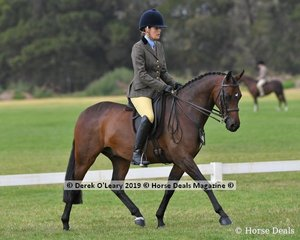 """Winner of the Graduate Show Hunter Galloway, """"Freshwater Prowler"""" ridden and exhibited by Brianna Freshwater"""