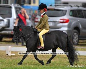 """Champion APSB Child's Shetland rider under 14yo, """"Carreg Wen Athena"""" ridden by Annabelle Richardson, exhibited by Debbie Machar"""