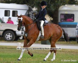 """Regalbrook Razzle Dazzle"" was in the Top Ten in the Child's Large Pony rider under 17 yo, ridden by Mia Heinrich and exhibited by Nelaana Heinrich"