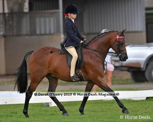"""Maxwood Matador Royale"" was Top Ten in the Child's Large Pony, rider under 17 yo, ridden by Shayleigh Joblin and exhibited by Kim Joblin"