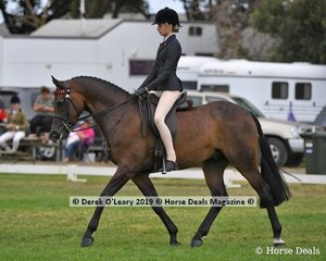 Reserve Champion in the Child's Hack rider under 17yo, Fearless FF ridden by Jessica Dertell, exhibited by Kate Dertell, Future Farms