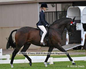 """""""Mister Majestic"""" was Top Ten in the Child's Hack rider uner 17yo, ridden and exhibited by Ayja Blu Grigg"""
