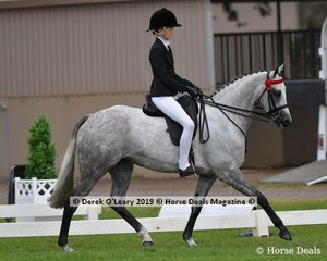 """Champion Child's Hack, rider under 17 yo, """"Just an Enigma"""" ridden and exhibited by Ava Halloran"""