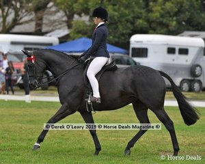 """Minstral Park Ballarina"" was Top Ten in the Child's Hack rider under 17 yo, ridden and exhibited by Adelaide Jacobs"