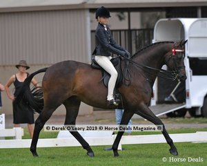 """Inafrenzy"" was in the Top Ten in the Child's Hack, rider under 17 yo, ridden by Sienna Kasickis and exhibited by Katie Ramsay"