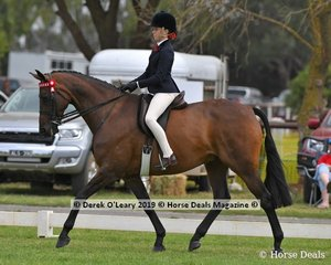 """Valeview Asio"" was in the Top Ten in the Child's Hack rider under 17 yo, ridden by Keeley Dykes exhibited by Sue-Ellen Latham"