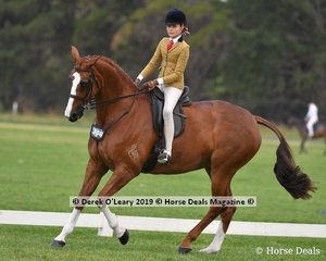 """""""Belcam Coralline"""" was in the Top Ten in the Child's Show Hunter Hack, Rider under 17 yo, ridden by Georgiana Walsh and exhibited by Georgie Kellock"""