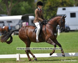 """Champion in the Child's Show Hunter Galloway, """"Gem Park Socialite"""" ridden and exhibited by Ava Halloran"""