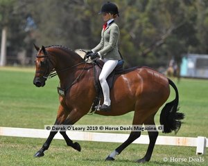"""""""Terra Felix XL"""" was Reserve Champion in the Child's Show Hunter Galoway, Rider Under 17 years, ridden by Ebonie Lee and exhibited by Holly Ticehurst"""