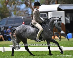 """Porcha"" was in the Top Ten in the Child's Show Hunter Galloway, Rider Under 17 yo, ridden by Taleisha Snell end exhibited by Shae Wishart"