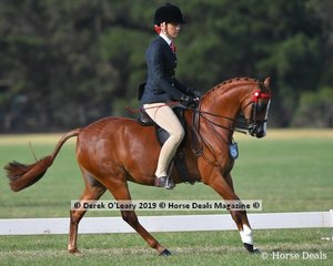 """""""PBM Springtime Holly"""" went Top Ten in the Open Large Saddle Pony, ridden by Shelley Howard and exhibited by Dianne Banks"""