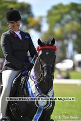 """Reserve Champion Open Large Saddle Pony, """"Wideacre Black Diamond"""" ridden and exhibited by Lynda Hayes"""